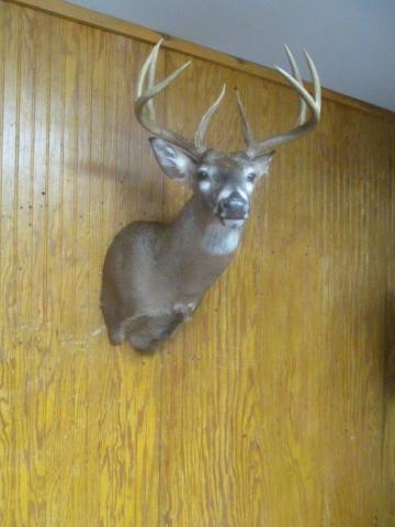 Charlie Miller            Whitetail                   170 lbs            8 pts      Deleware