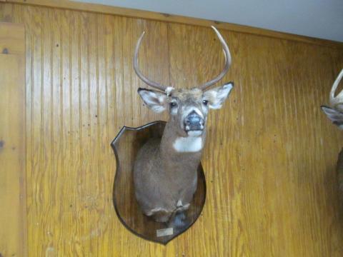 Conrad Marsano  Whitetail   157lb   6 pts  Vermont
