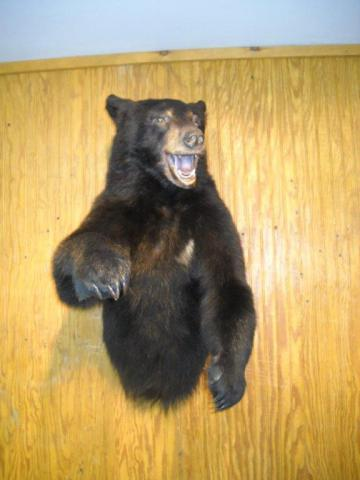 Bear    180lbs Vermont