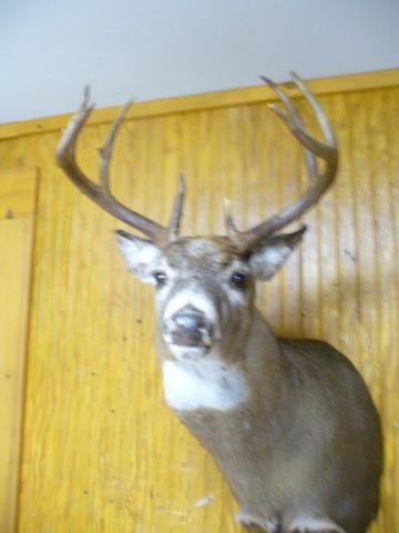Whitetail - 160lb - 9 pts  - Vermont