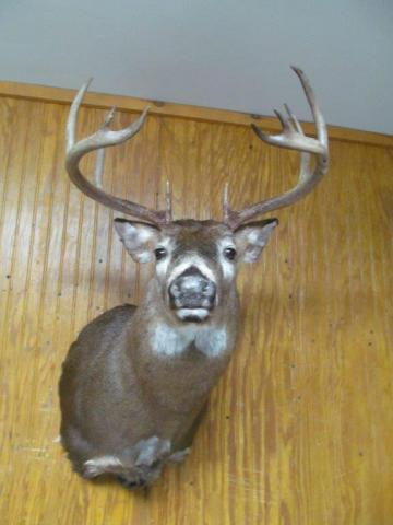 Whitetail   166lb   10 pts  Vermont