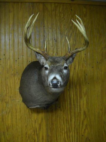 GF Deer - 180 - 8pt - Vermont