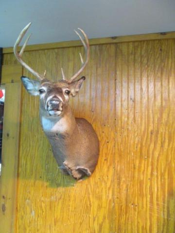 Nicholus Iocco     Whitetail       160lb    8 pts       New York