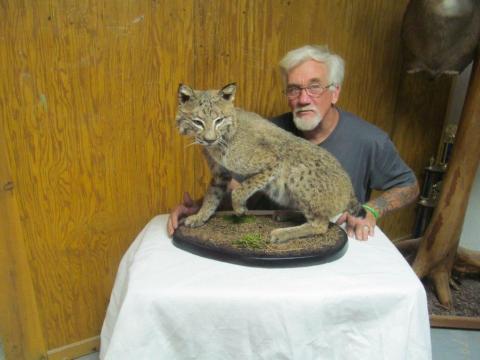 Robert Kerr    bobcat