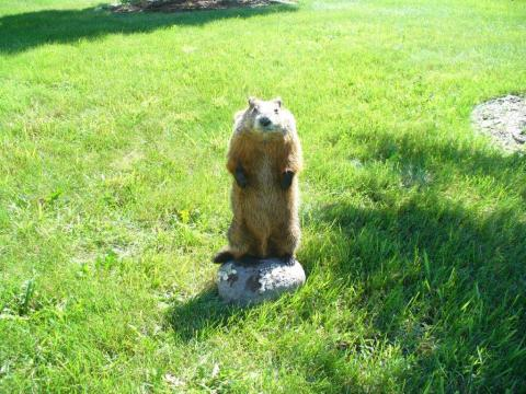 Wil Roberts    woodchuck