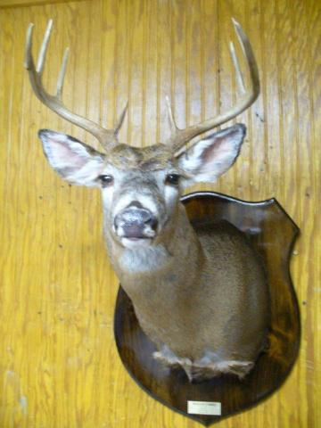 William Forbes          Whitetail                   145 lbs            8 pts     Vermont