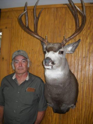 mule deer - 10 pts  Montana