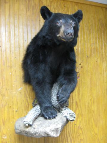 Carter's Bear