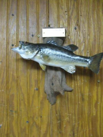 Chance Denecker      Bass  12in   Vermont   1st fish