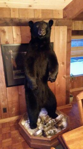 Bear - 244lb - Vermont