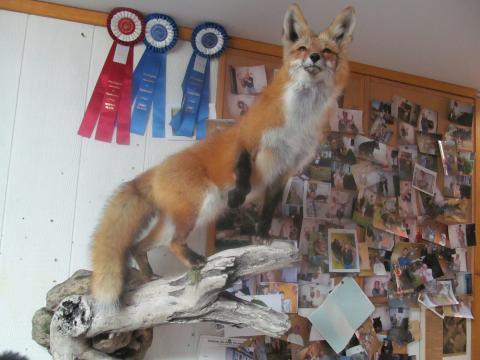 McGuire Fox